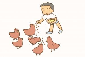 養鶏、小学6年生、秋川牧園、少年時代