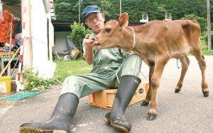 政光さんと、生後1か月のジャージー牛