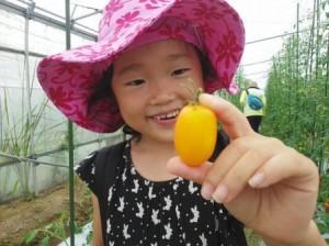 ゆめファームでトマトが取れました!