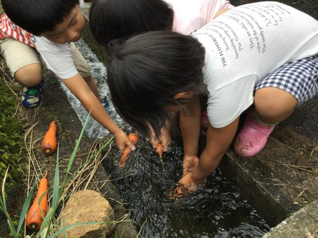 収穫した野菜を用水路で洗いました。 冷たい水が気持ちいいー!