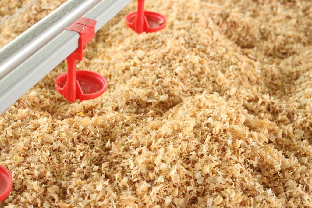 無投薬飼育のために、敷材は発酵させ繰り返し利用するため、このようなきれいな木チップを目にすることができるのも、新鶏舎だけになります。