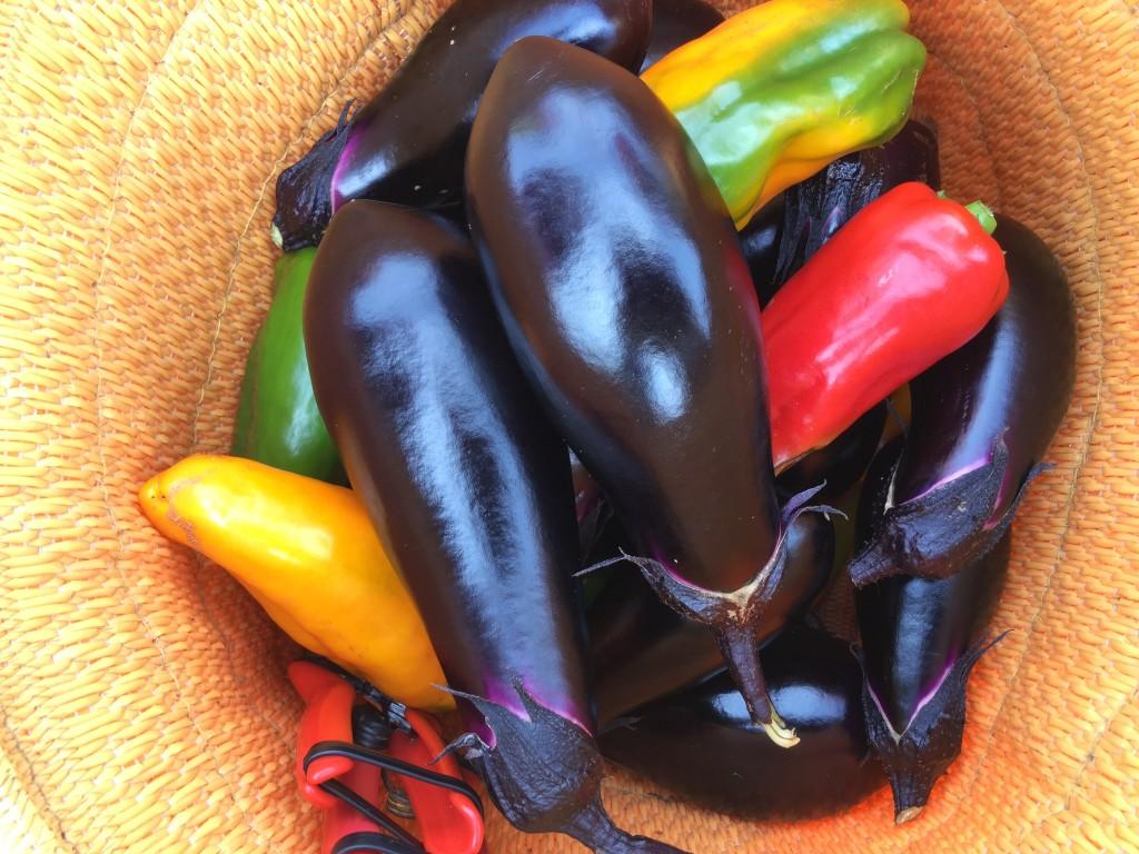 収穫した野菜たち!