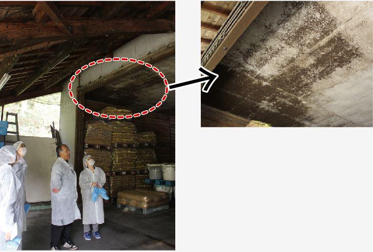 蔵の天井に見える黒い斑点が「蔵酵母」