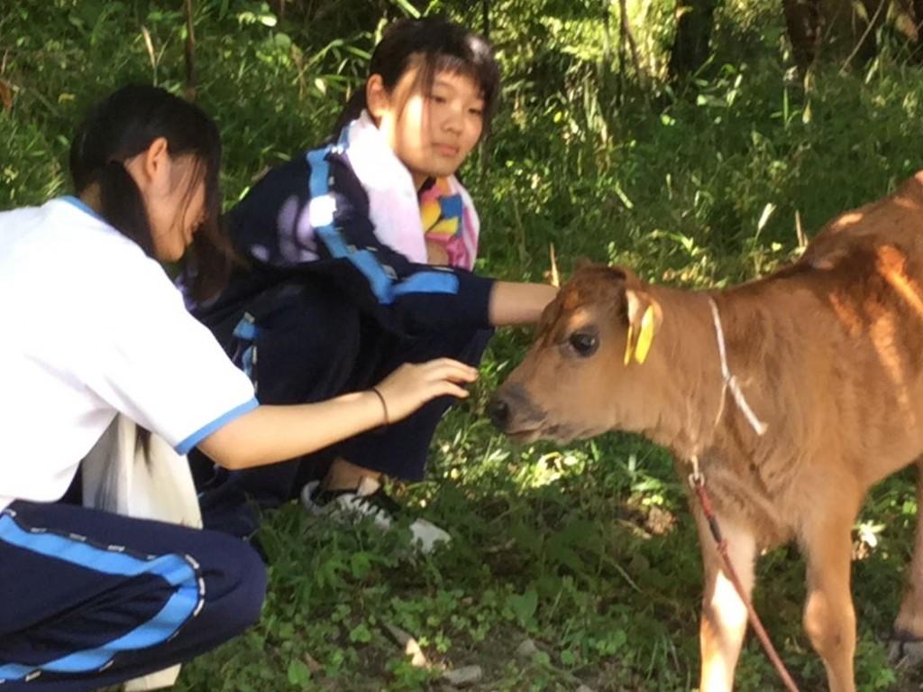 毛が柔らかくて手触りがいい仔牛