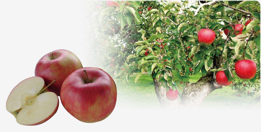 秋川牧園のりんご2