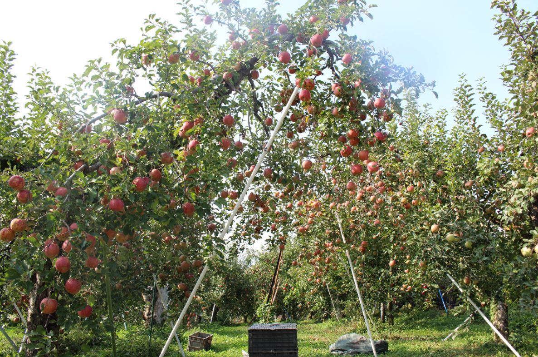 のびのび、自由に枝を伸ばす幹。整えられたというよりは自然のまま。