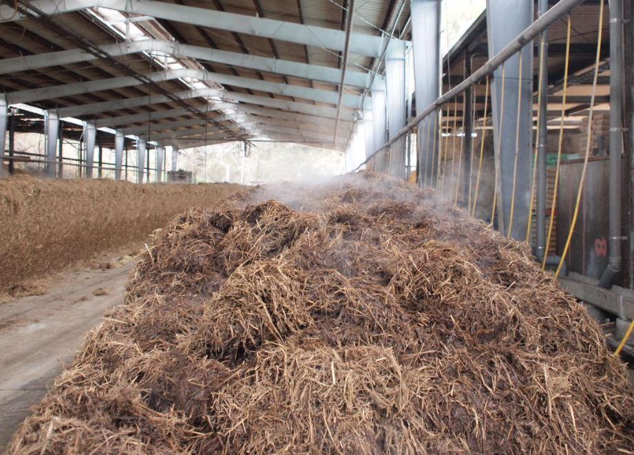 発酵時は温度が80度にもあがり、湯気が立ち上がります。ものすごいアンモニア臭があたり一面漂います…。でもこの臭いは発酵具合を確かめるためにも大切な要素なんです。