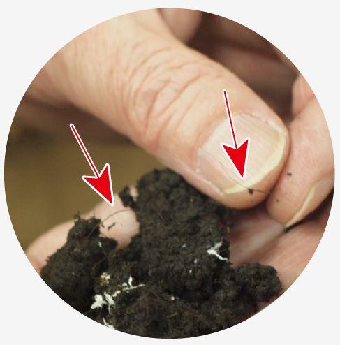 ピートモス。写真では少しわかりにくいですが…確かにびっくりするほど髪の毛そっくりです。因みにマッシュルームを育て終えた培地は、有機肥料として地元の農家さんにお譲りしているんだそう。