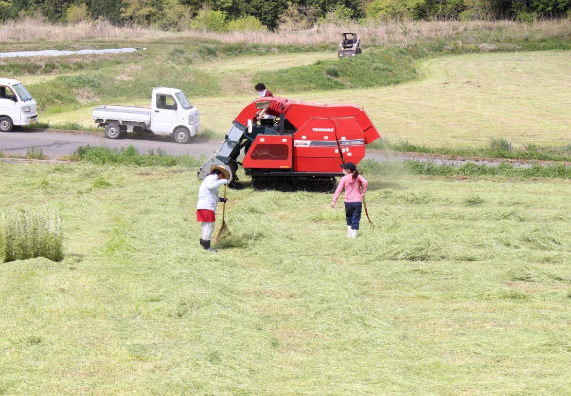 機械で取りきれなかった牧草は、人の手でかき集め再度収穫。大切に育てた飼料。取り残しません!