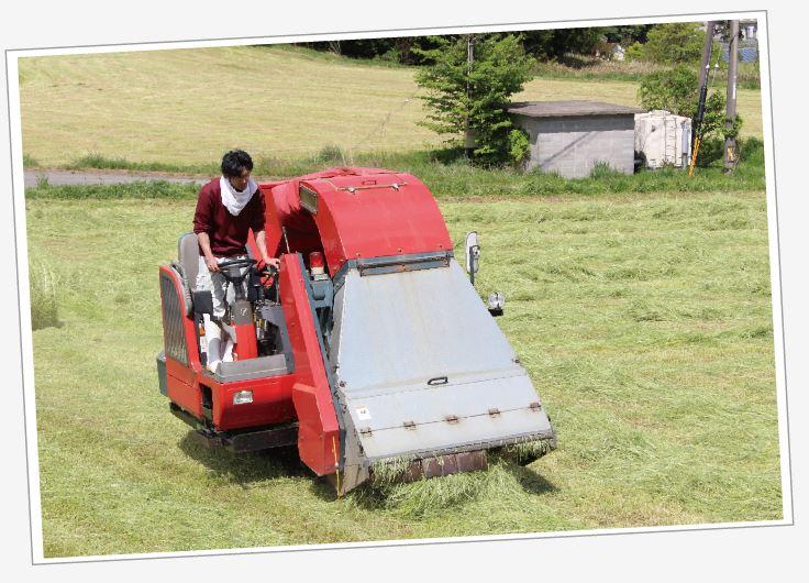 牧草を収穫する手嶋牧場長