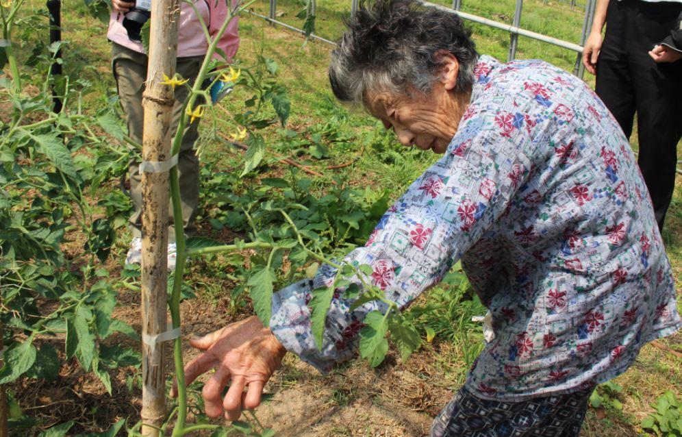 トマトを植えている宮本さん
