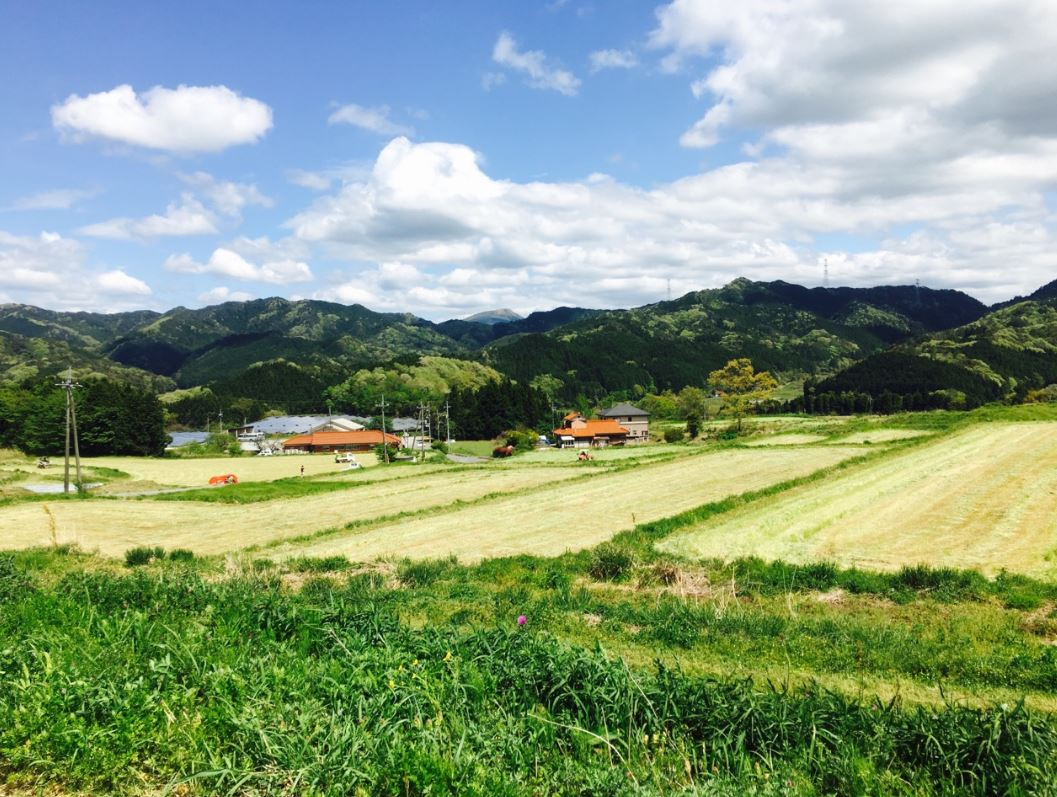 現在の自給飼料を育てる畑。心が洗われる様な美しい風景です。