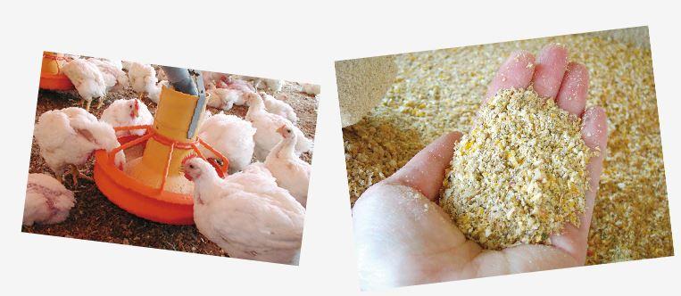 飼料米は籾(もみ)ごと配合します。