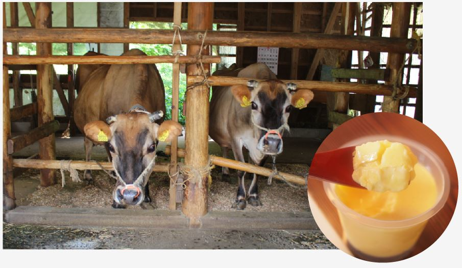 かつては家業でしたが今は趣味で飼っていると言うジャージー牛。牛乳は、農家レストランで提供するプリンやアイスなどに使用されています。