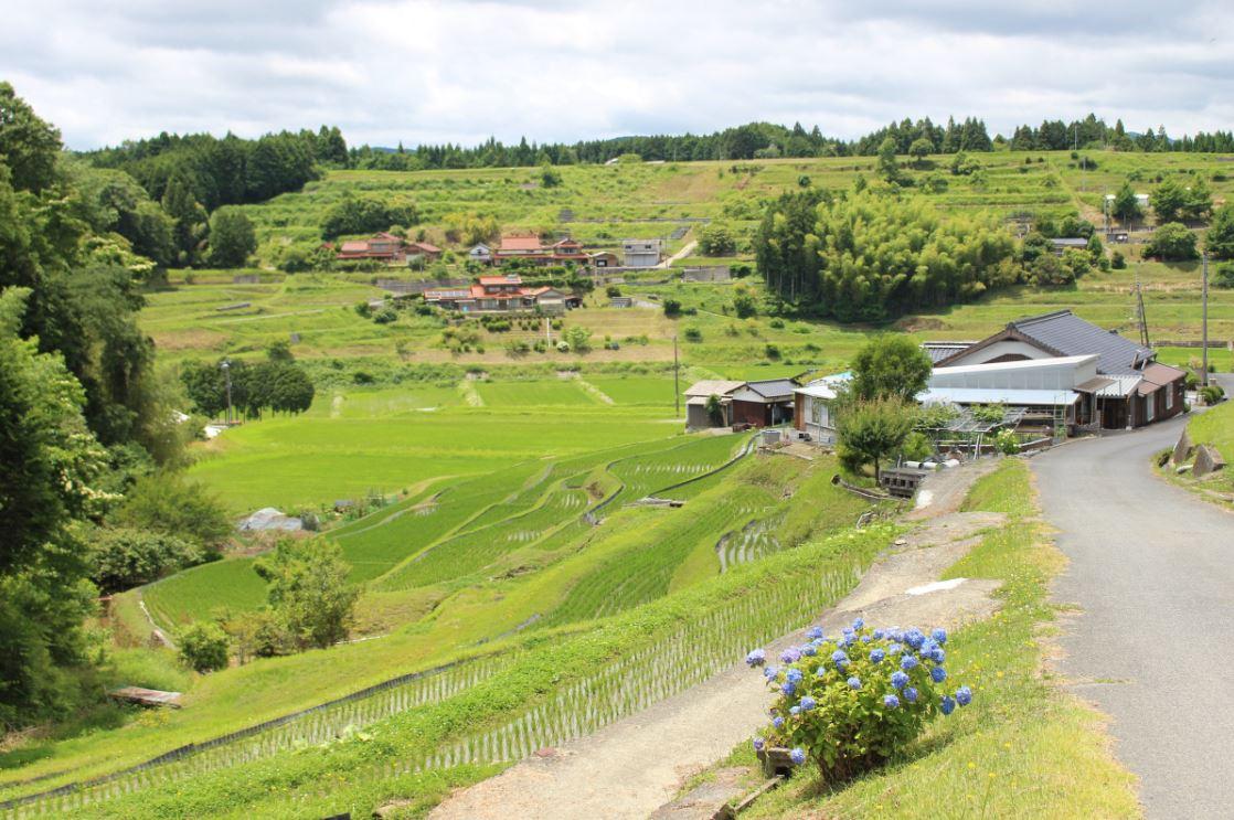 佐伯さん率いる「都濃(つの)自然米生産グループ」は、この棚田で「西京の恵」を栽培しています。