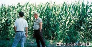 とうもろこし畑、アメリカ、秋川牧園、PHF、ポストハーベスト、無農薬、安心安全