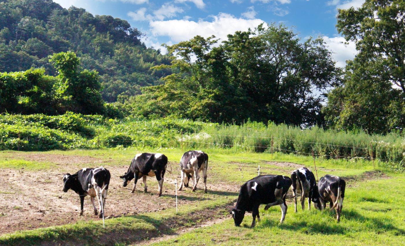 むつみ牧場の風景
